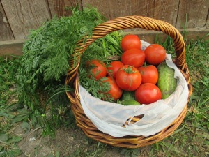 A basket of fresh veges for lunch