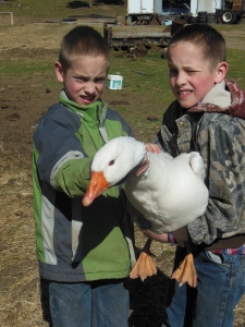 The twins, Abel and Seth Dahlin with Mr. Goose