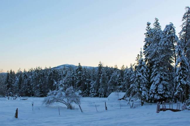 snowy-farm